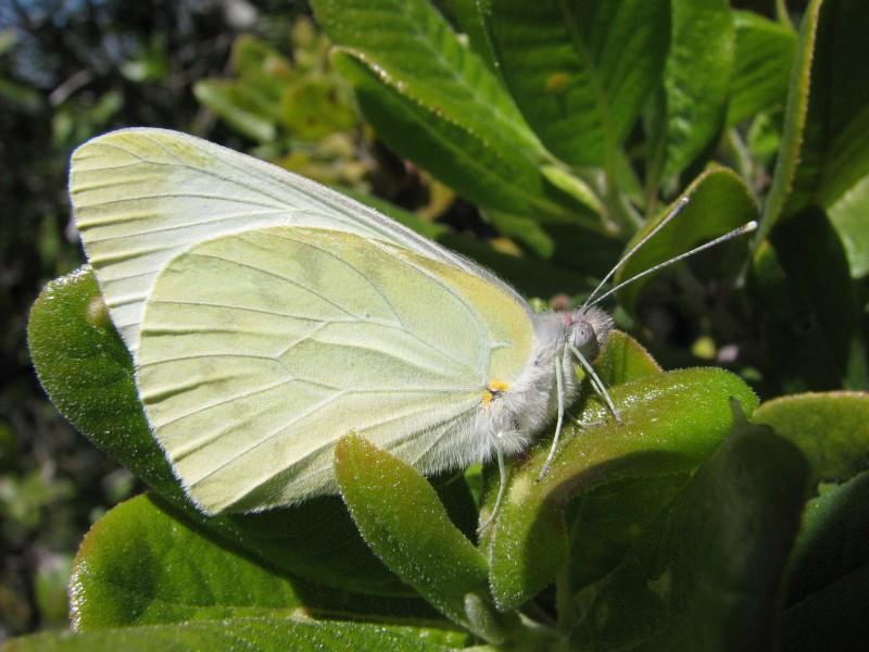 Pin Mariposa Color Negro Con Chispas Verdes Fondos