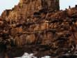 Roquerio loberia
